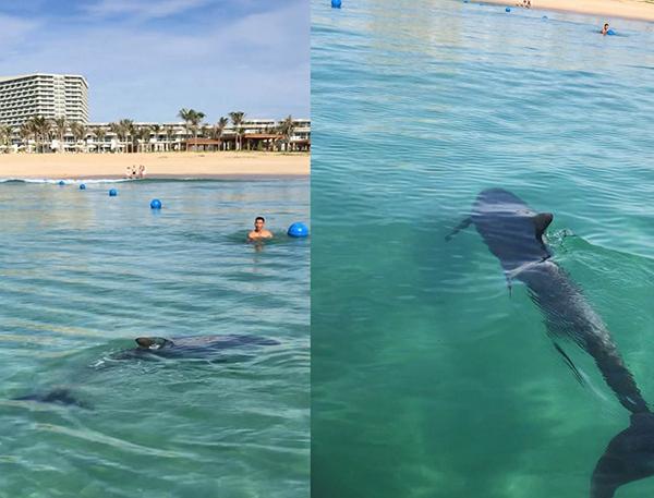 Cá heo xuất hiện tại Bãi Dài Cam Ranh